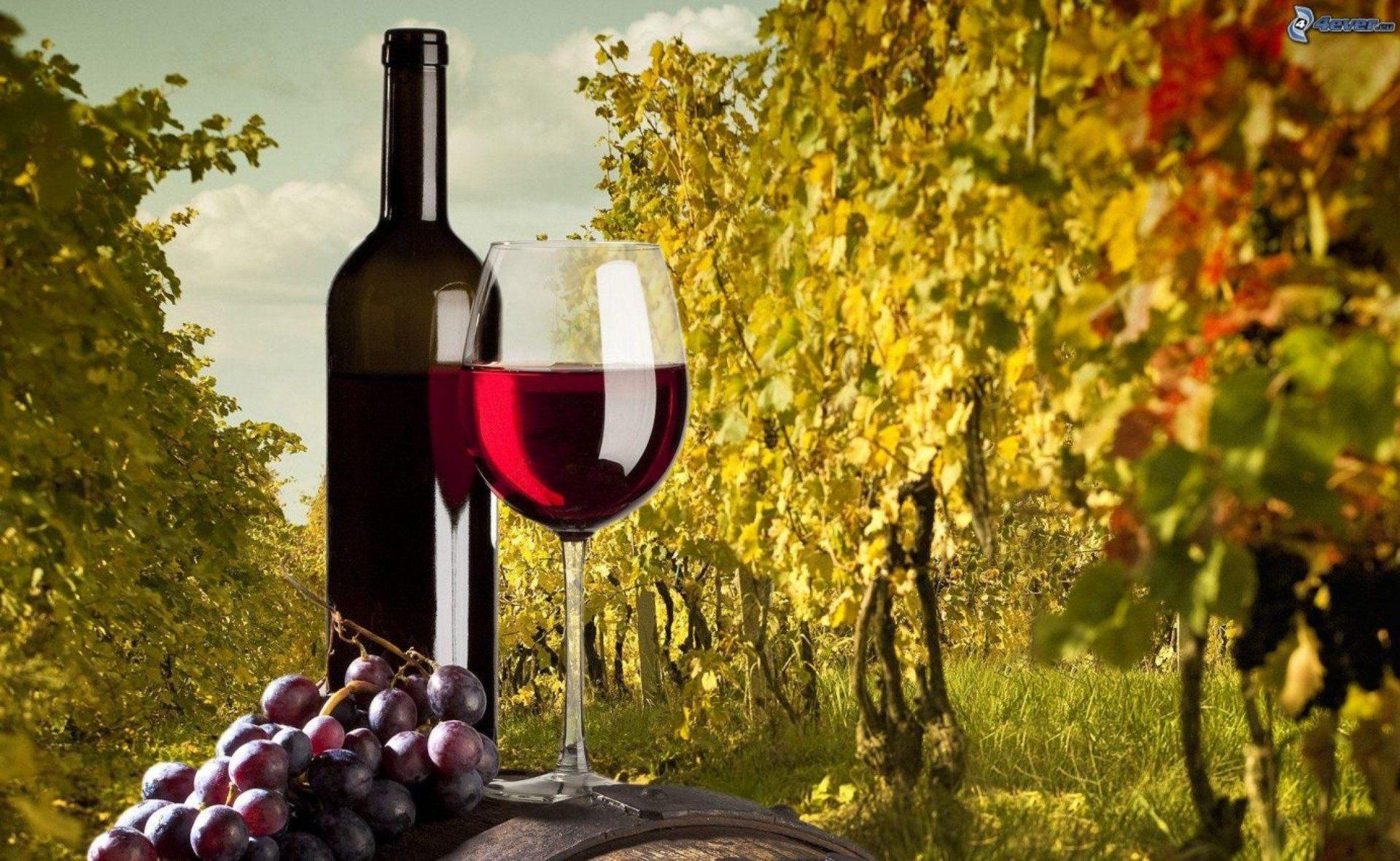 vino-bottiglia-tazza-uva-vigneto-172518